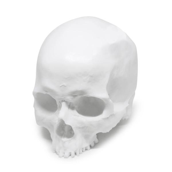 """A Pound of Flesh - """"Yorick"""" Skull"""